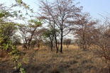 Limpopo hunting area