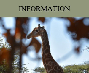 South Africa hunting safari information, experience, package prices