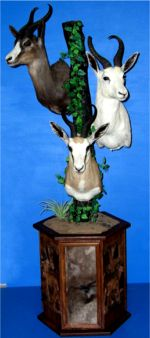 Triple Springbok mount