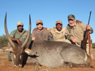 Bill's waterbuck