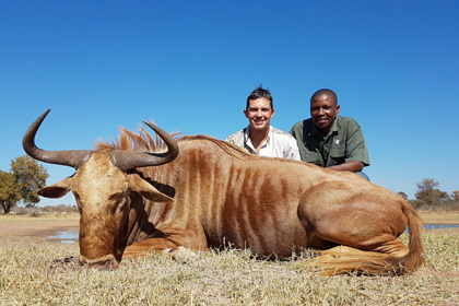 Jan's Golden Wildebeest