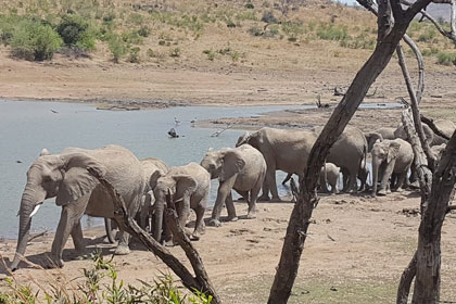 Encounter with Elephants at Pilanesberg National Park